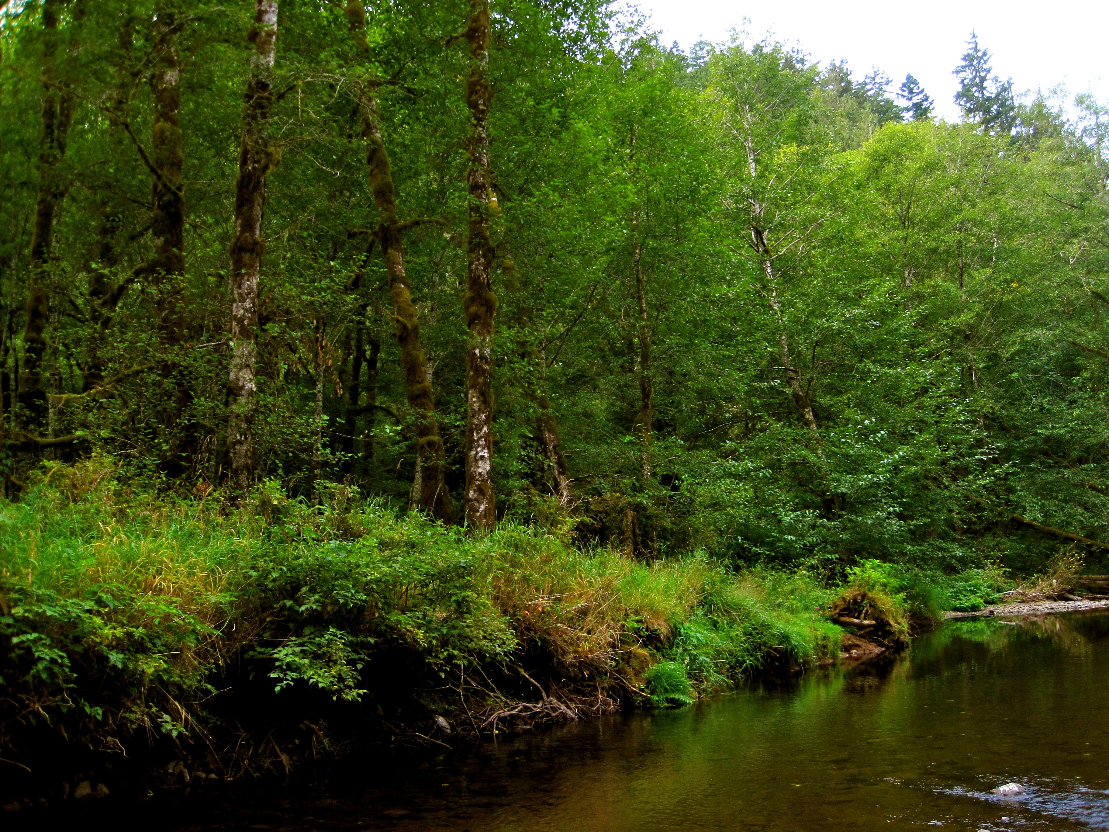 Oregon Nature Ndash Irishoodart
