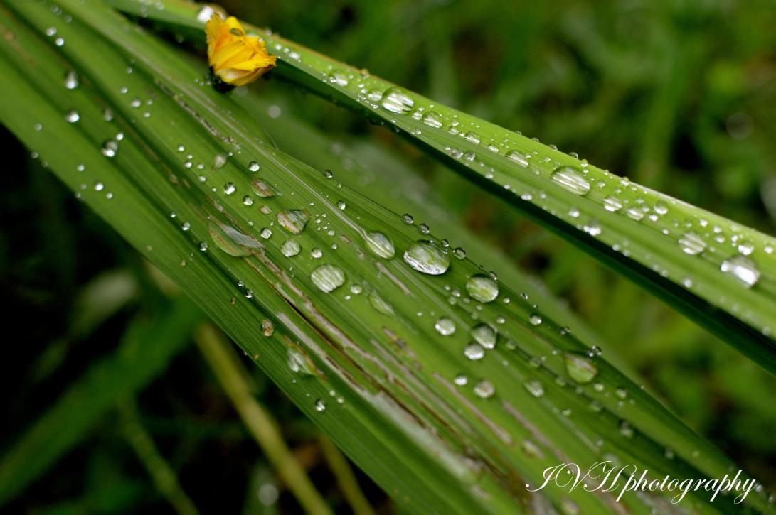 Raindrops_blades